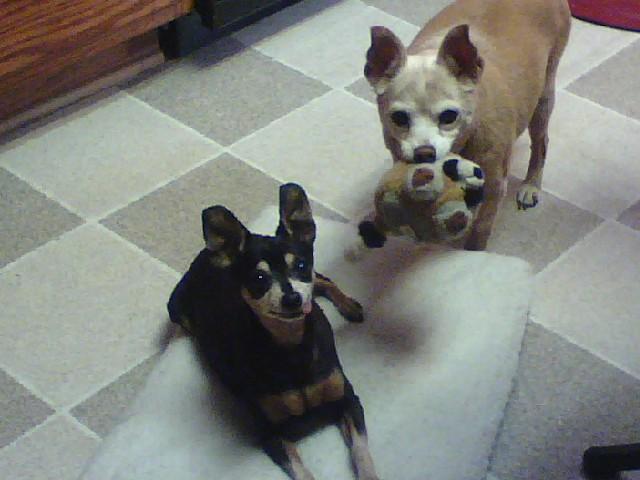 ChaCha and Bella (2)