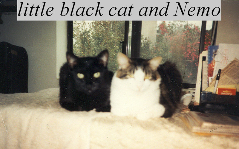 nemo-black-cat-800x500